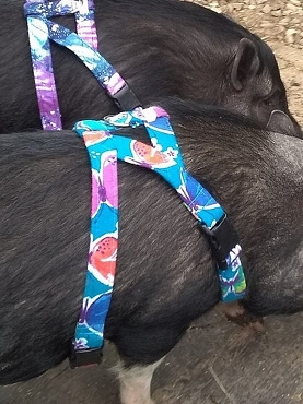 Mini Pig Harness - Patterns